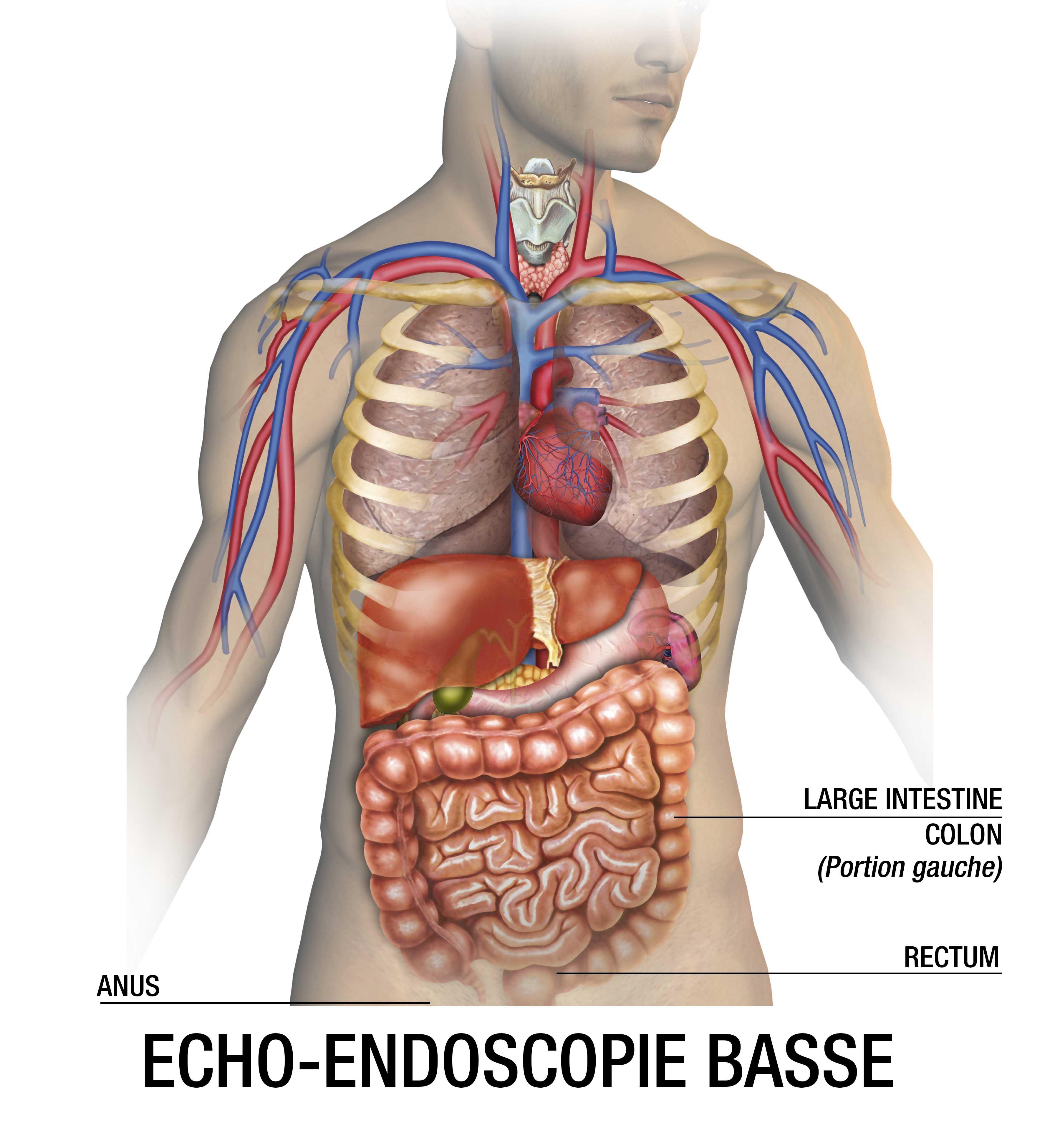 echo endoscopie basse : examen endoscopie base - Clinique1037
