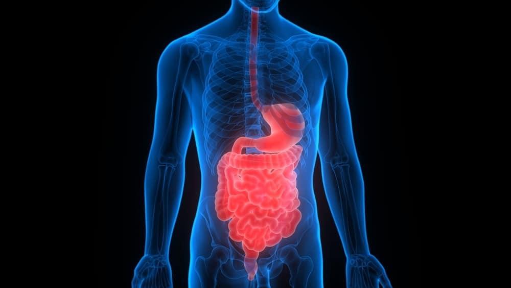 Mieux comprendre le système digestif : ses parties et ses fonctions
