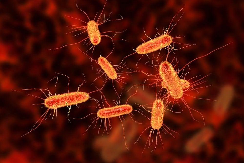 L'infection à la bactérie E. coli peut causer de symptômes sérieux